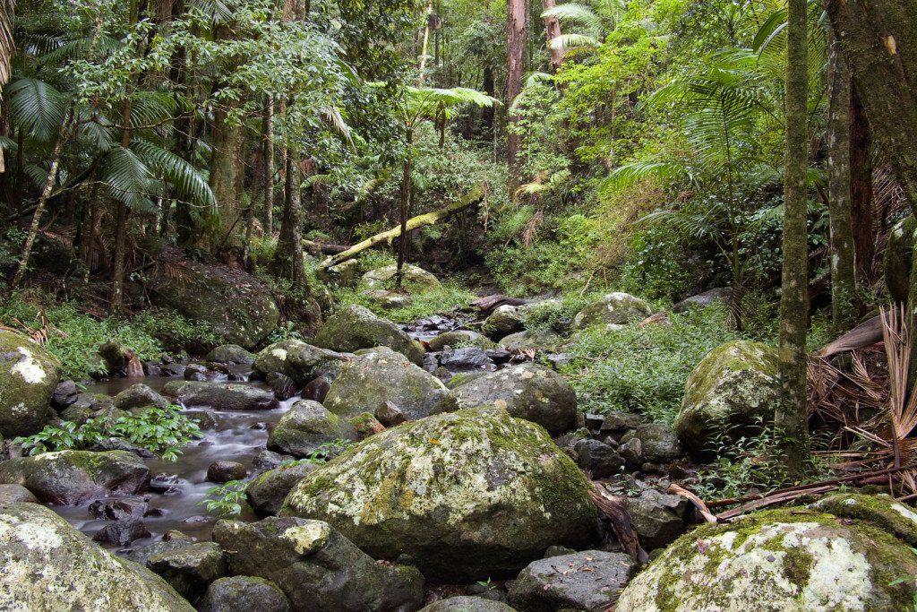 Rainforest, Lamington National Park, Australia