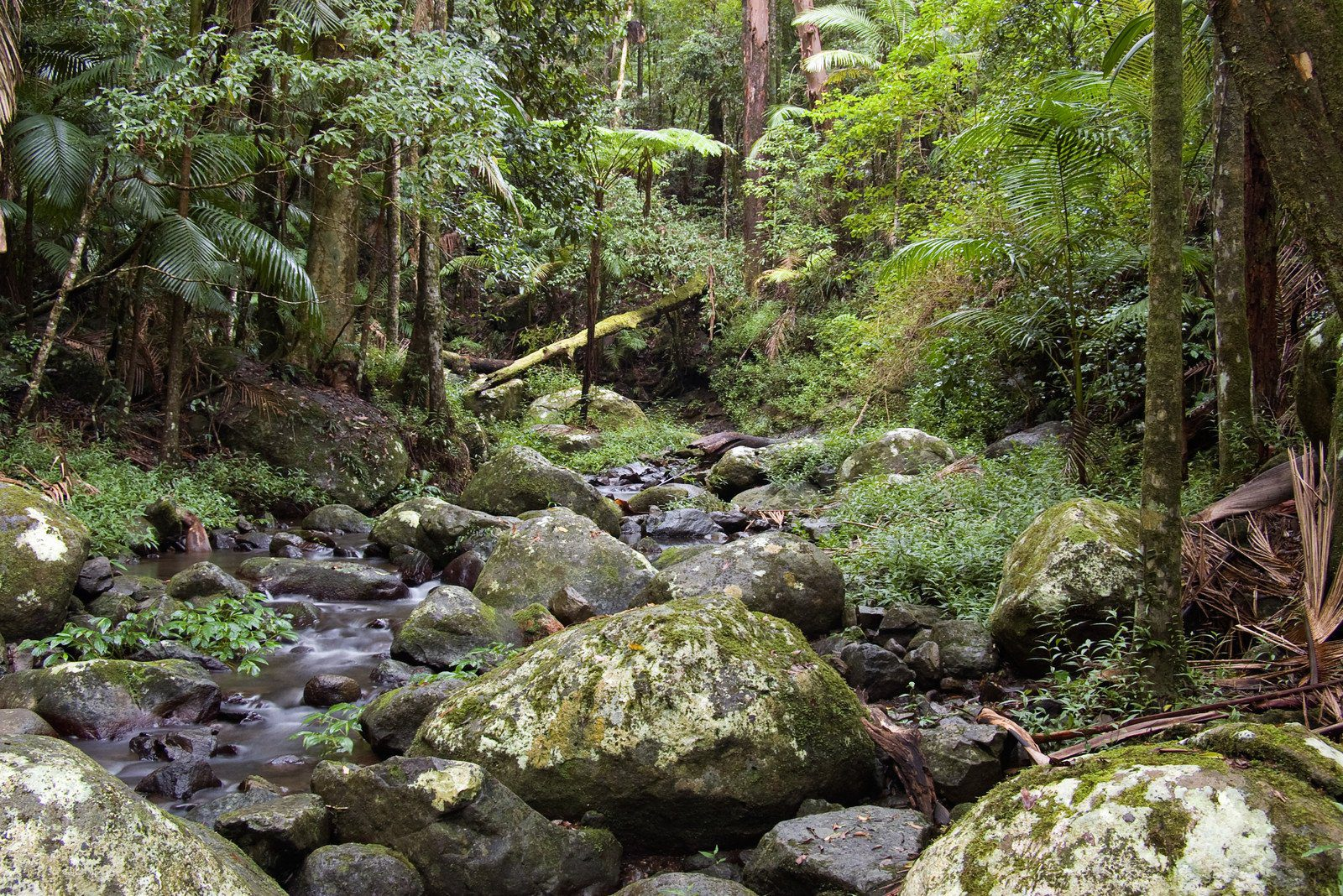 Rainforest, Border Ranges National Park, New South Wales, Australia