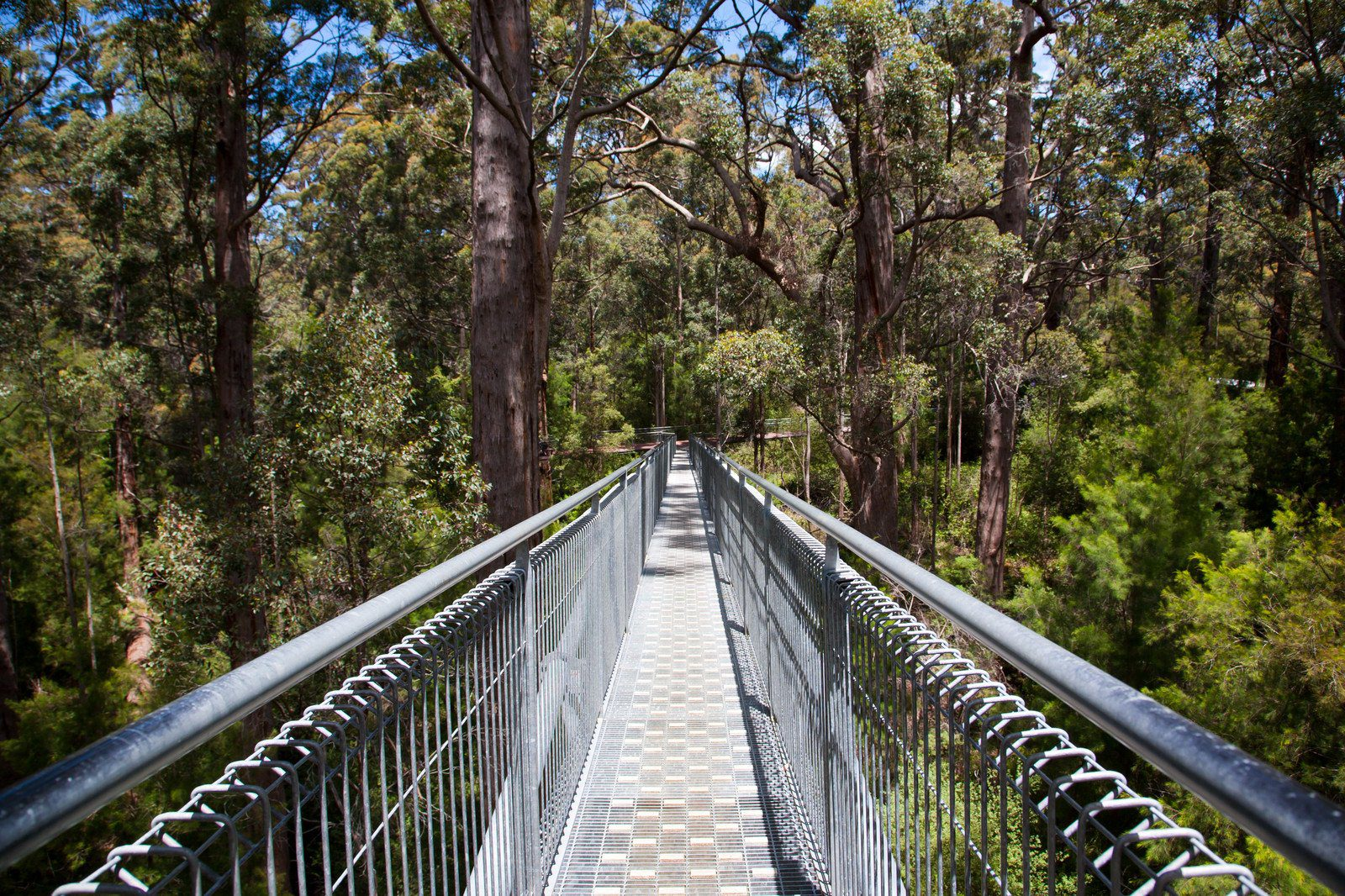 Valley of the Giants Treetop Walk Western Australia & 7 Tranquil Australian Treetop Adventures You Havenu0027t Tried Yet ...
