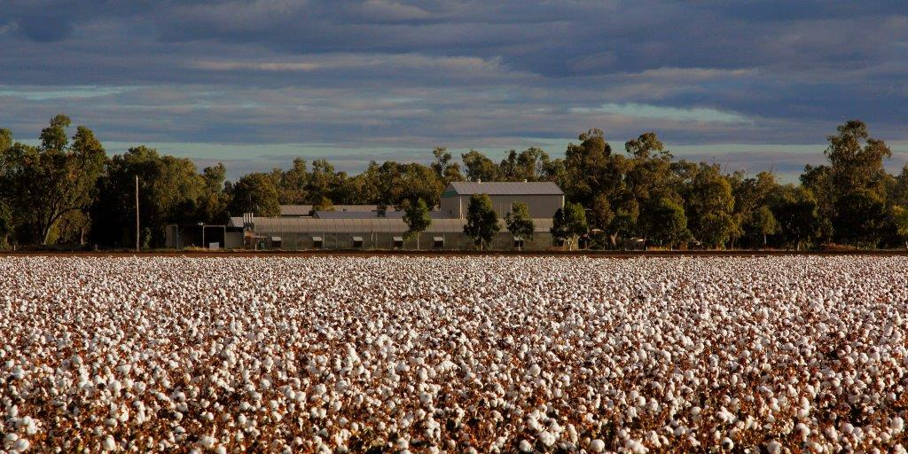 Cotton fields near Narrabri, NSW Australia