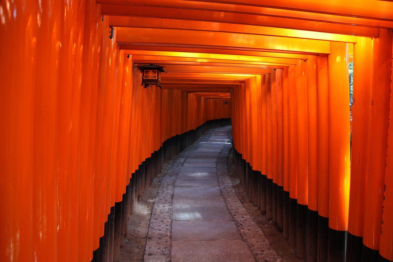 Inside the tunnel of Japanese Torii Gates at Fushimi Inari Taisha , Kyoto Japan