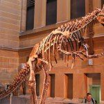 Review:  Tyrannosaur Exhibition at the Australian Museum in Sydney