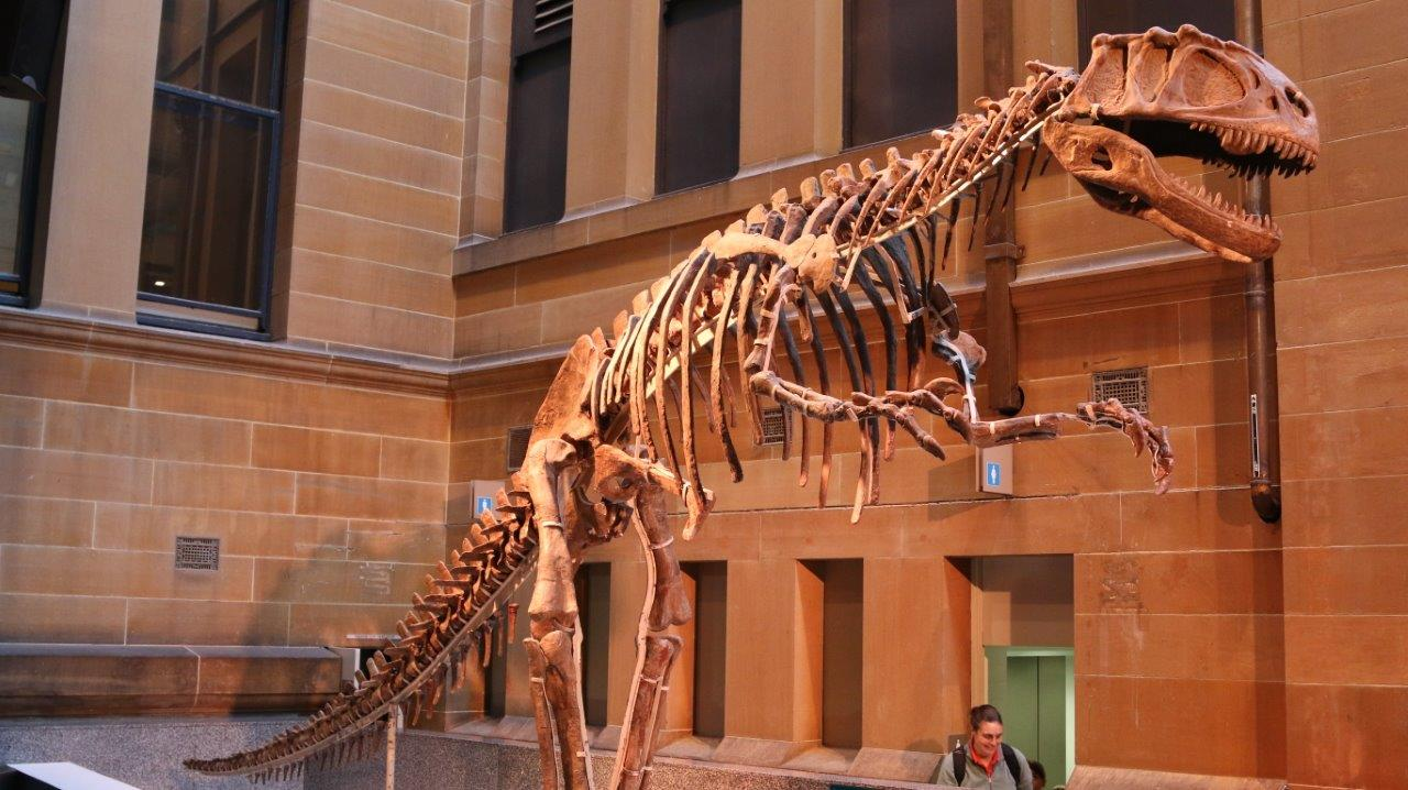Tyrannosaur Rex Skeleton at the Australian Museum in Sydney