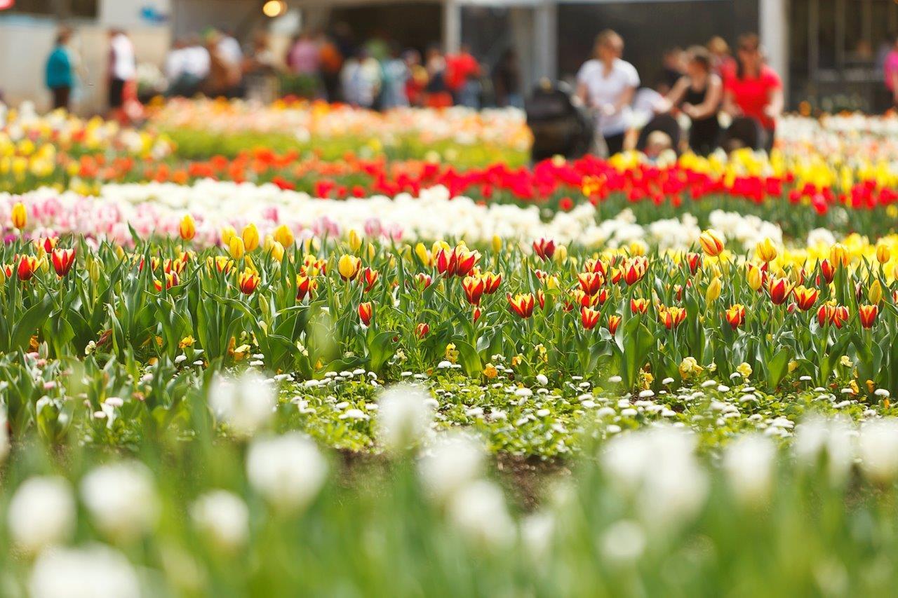 Floriade in Canberra, Australia