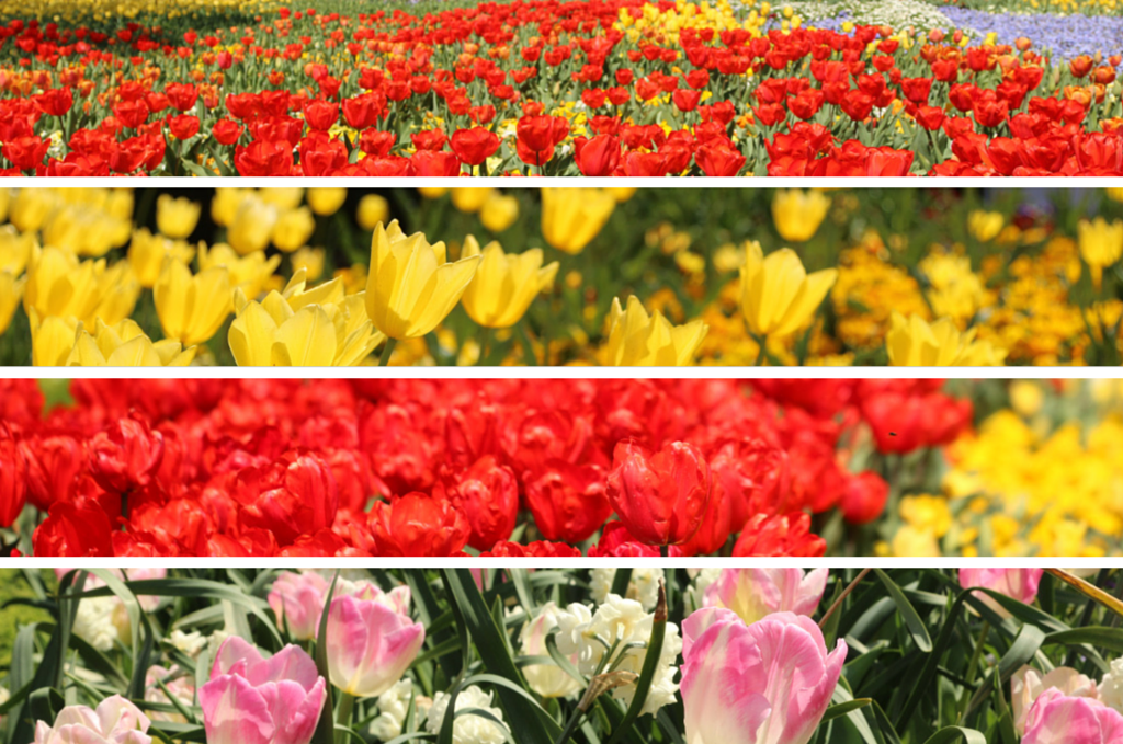 Floriade Flower Festival Collage
