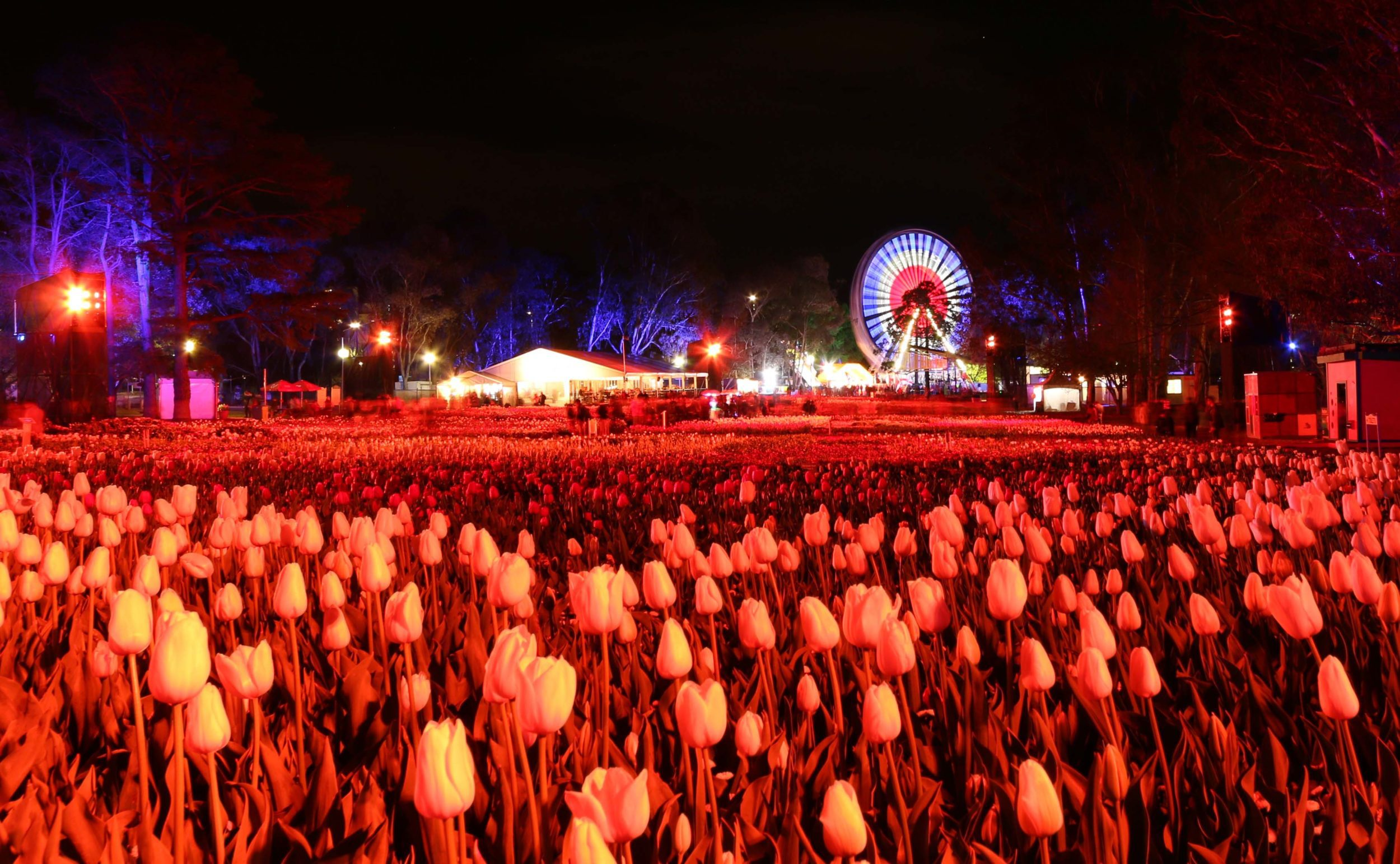 Tapestry of Flowers at Floriade NightFest in Canberra