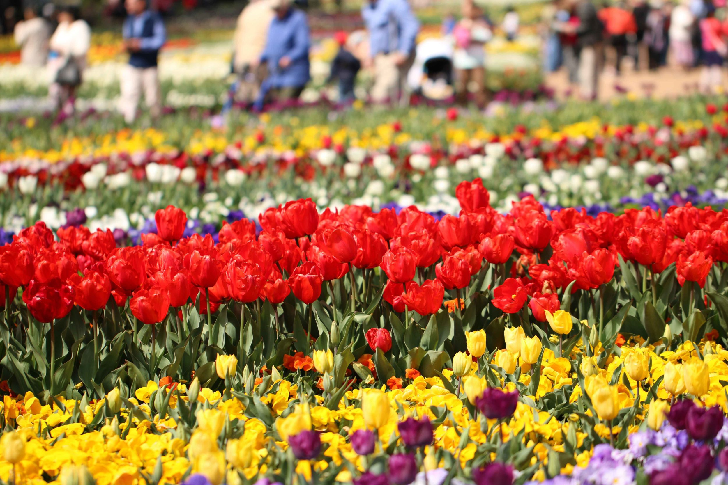 Main Flower Display at Floriade in Canberra