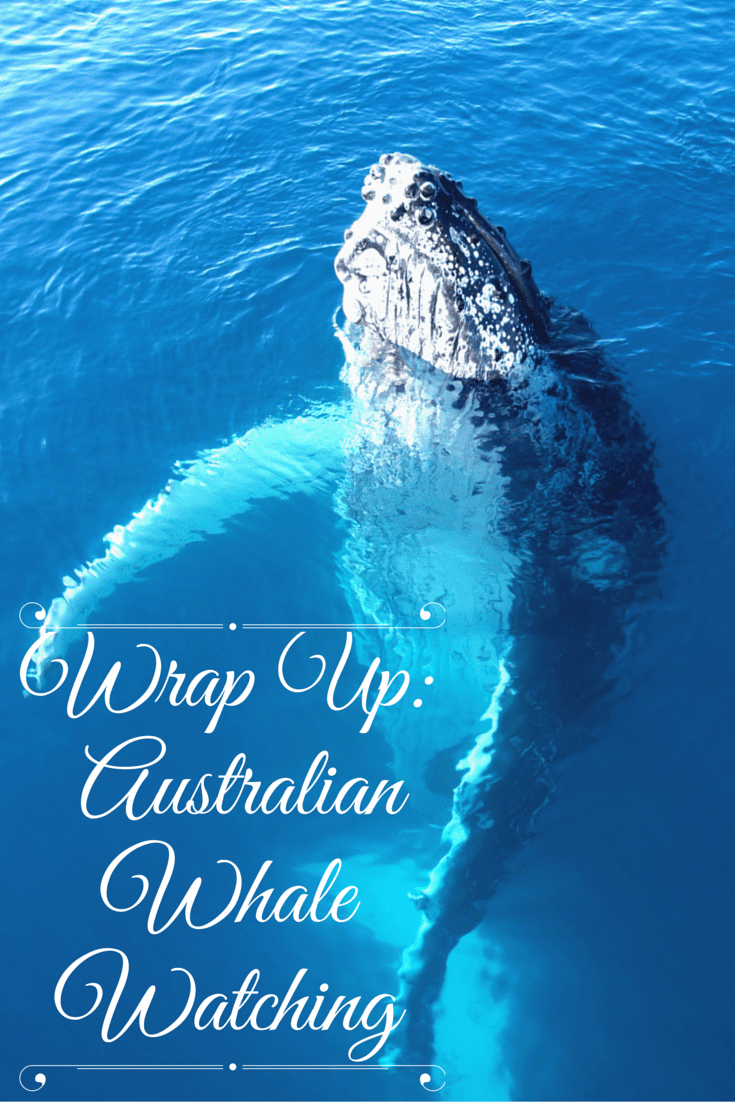 Wrap Up - Australian Whale Watching