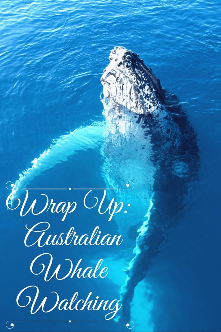 Wrap Up -Australian Whale Watching