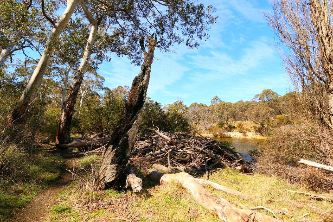Flood Remnants at the Thredbo River Picnic Area near Jindabyne Australia