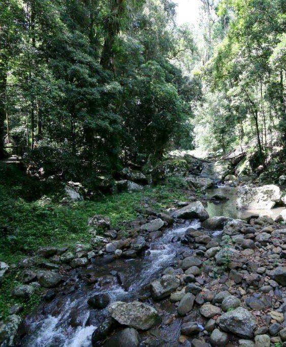 Walk to Natural Bridge, Springbrook National Park in Queensland