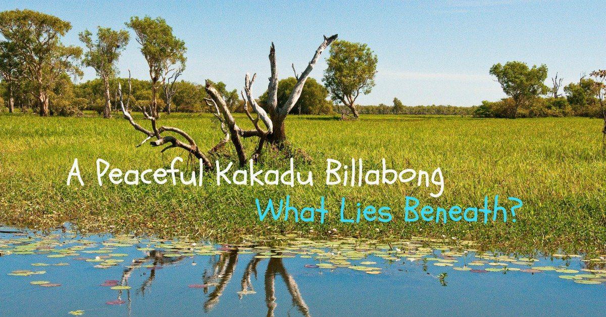 Kakadu Yellow Water Billabong