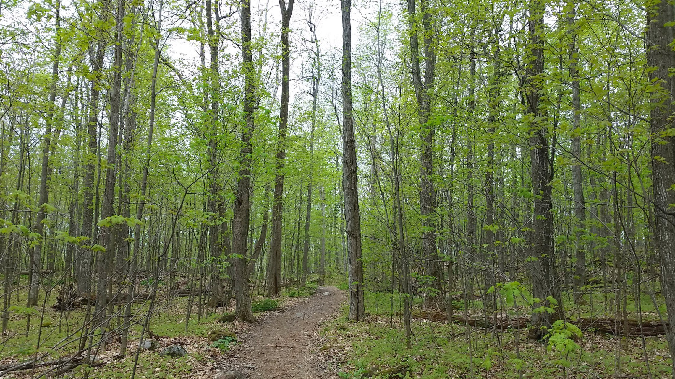 A lovely hike along the Lauriault Trail in Gatineau Park, Canada
