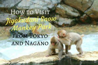 How to Visit Jigokudani Snow Monkey Park from Tokyo and Nagano