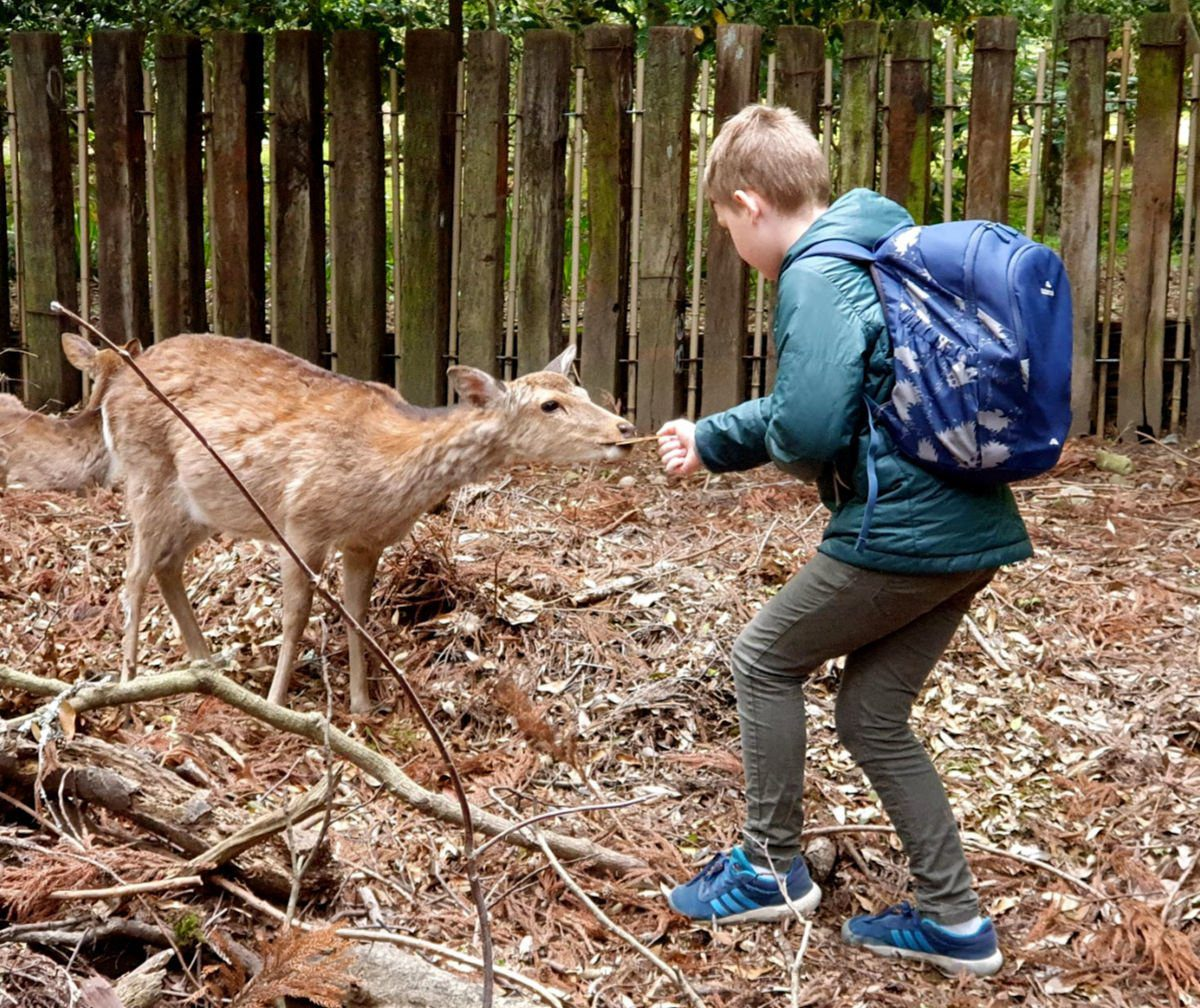 Feeding Deer at Nara in Japan