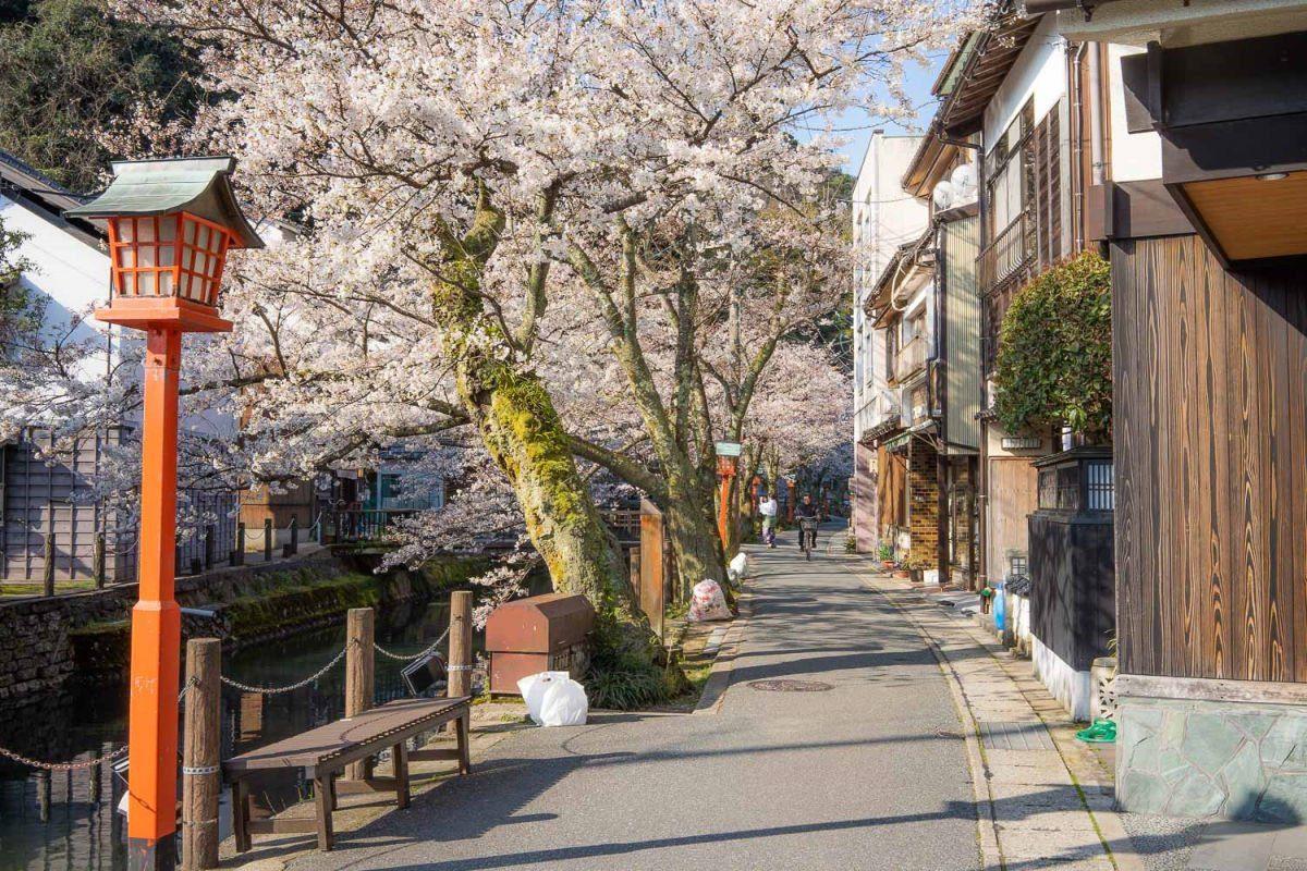 Kinosaki Onsen Cherry Blossom Season by Never Ending Voyage