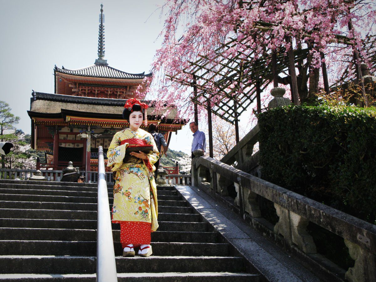 Kyoto Cherry Blossom Season by Knycx Journeying