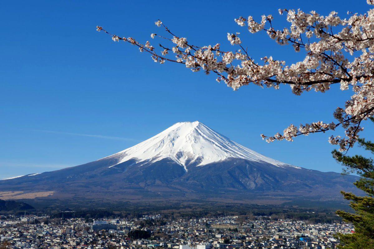 Mt Fuji Views from the Chureito Pagoda during the cherry blossom season
