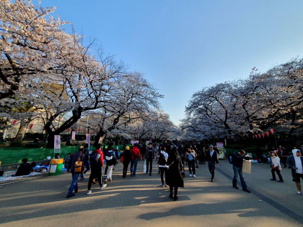 Sakura Season in Ueno Park in Tokyo