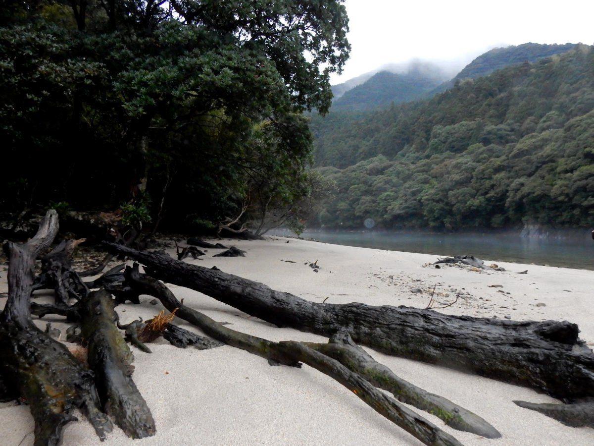 Yakushima Island by The Trip Goes On