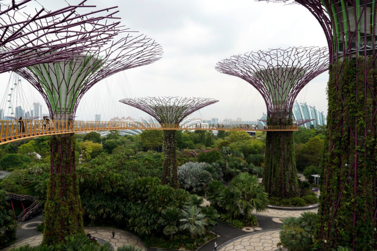 Supertree Grove Skyway in Gardens by the Bay in Singapore, with views of the Singapore Flyer, Flower Dome and Cloud Forest Dome in the background