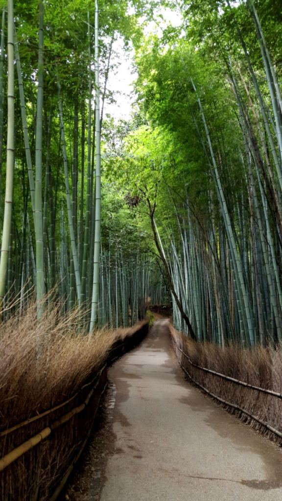 Exploring the Arashiyama Bamboo Grove (before the tourists arrive!)