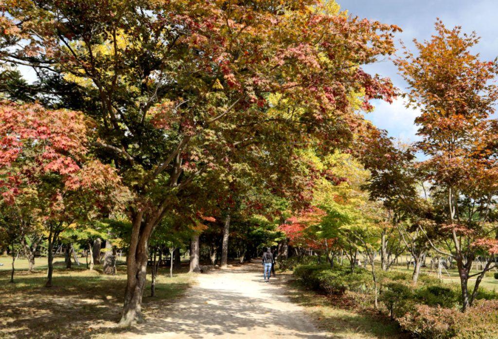 Pleasant Autumn Colours Starting to Emerge on Nami Island